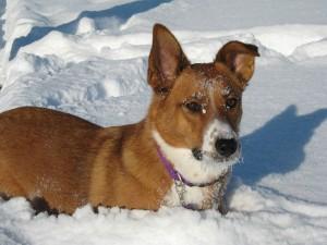 Frosty Serena